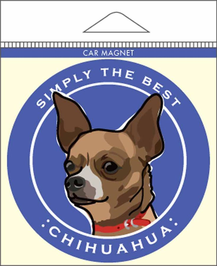 111 Best Chihuahua Dog Lover Images On Pinterest Chihuahua Dogs