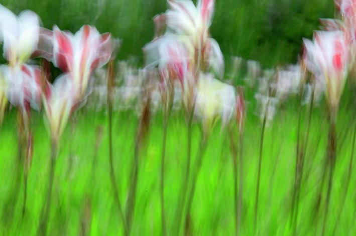 'Le Jardin de Renoir', 2009, photograph by Cade Turner. Limited Edition Archival prints available for sale.