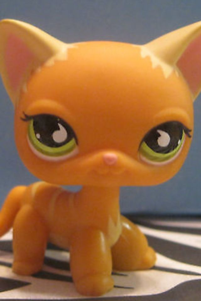 1000 Images About Lps Short Haired Cats On Pinterest