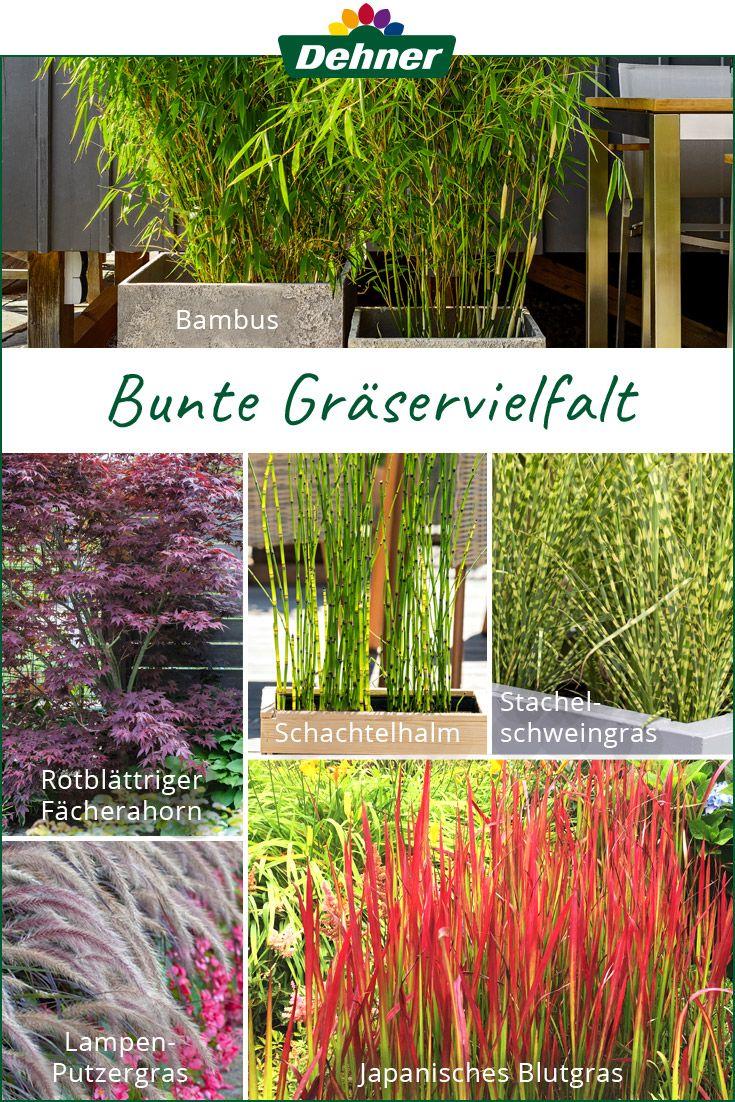 Trendthema Graser Bepflanzung Graser Pflanzen Pflanzen