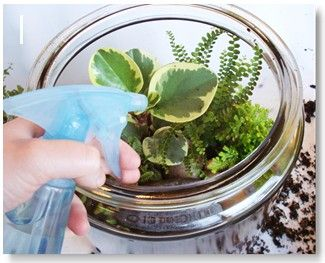 Good tutorial for making and maintaining a terrarium.