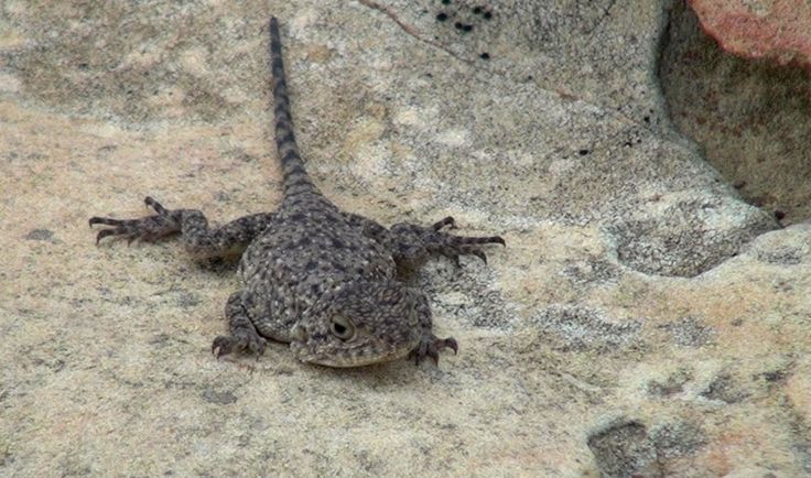 A tiny lizard found on top of the mountain. I have no idea what it's called.