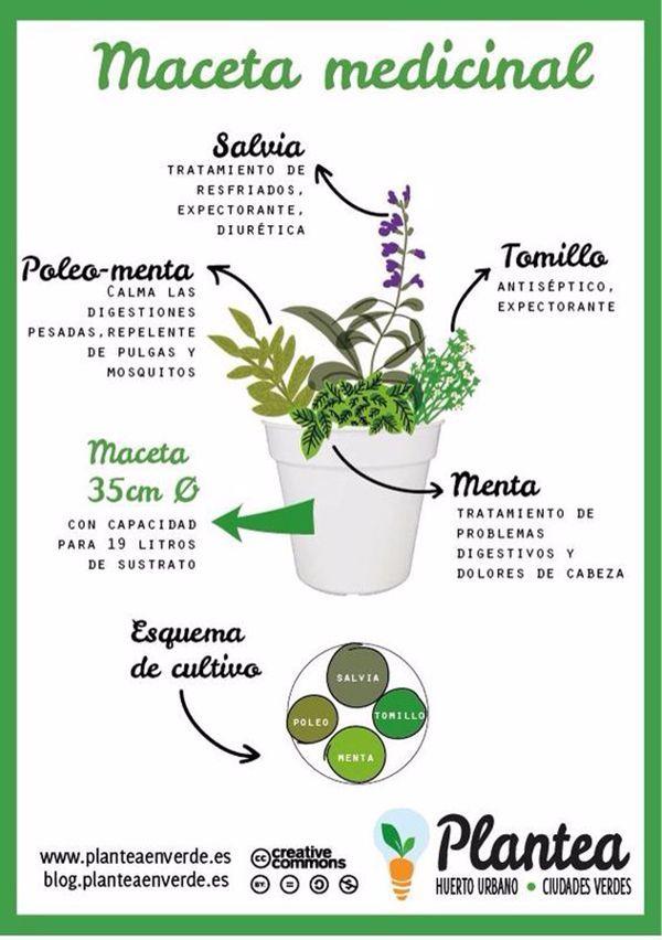 4 plantas curativas que se pueden combinar en una maceta medicinal. #infografia #plantascurativas #salud