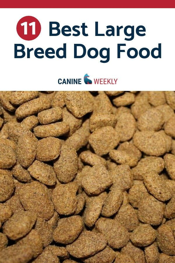 11 Best Large Breed Dog Food Picks In 2020 Dog Food Recipes