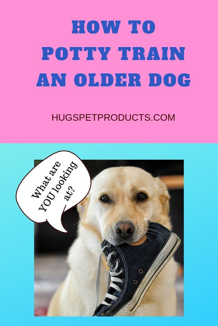 How To Potty Train An Older Dog Dog Training Tips Dog Training