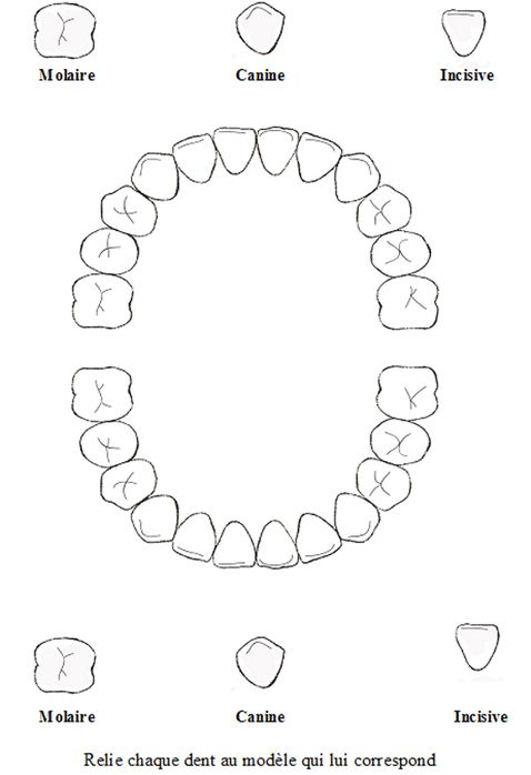 Tete a modeler - Les Dents