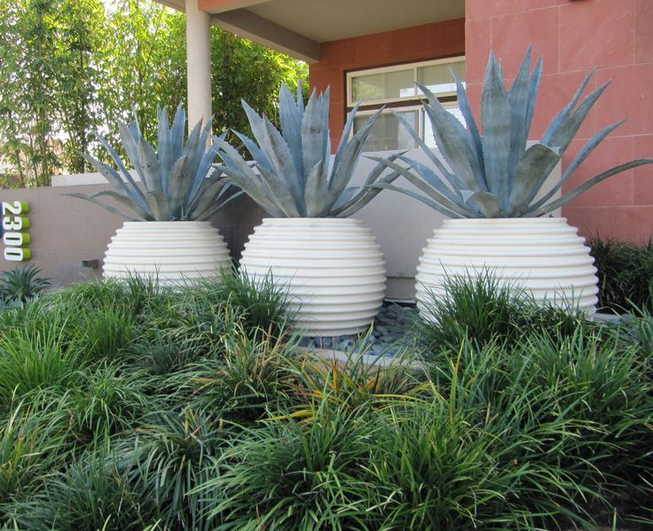 I think I would have preferred these pots to have been in terracotta.  However, white does work in a very hot climate.