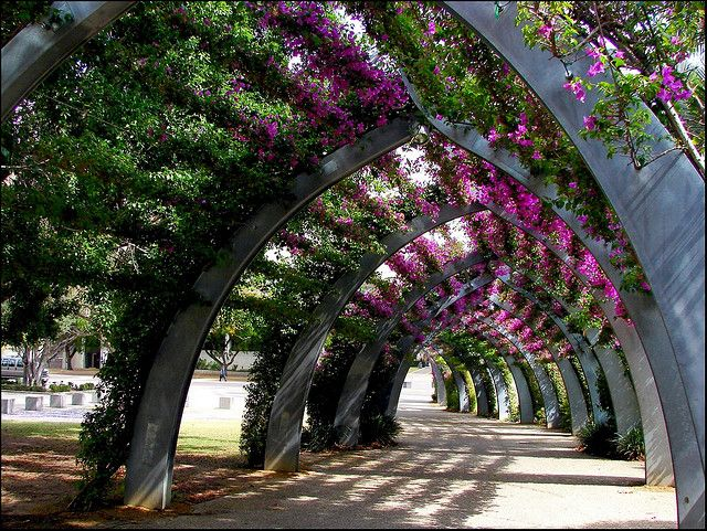 ~~The Arbour, Brisbane by Tatters~~