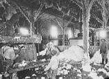 Significant Events of the American Industrial Revolution: Interior of a Cotton Gin