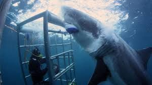 This is my dream vacation. 3 minutes....I just love this magnificent animal!