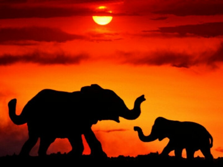 Elephants In The Sunset Elephants Pinterest The O