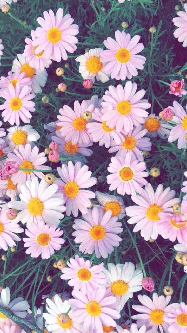 Wallpaper Flower Girl Favorite Flower Theme Flower Background Iphone Flower Iphone Wallpaper Vintage Flower Backgrounds Flower theme wallpaper images