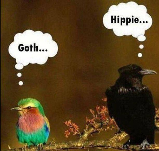 Goth and Hippy Bird