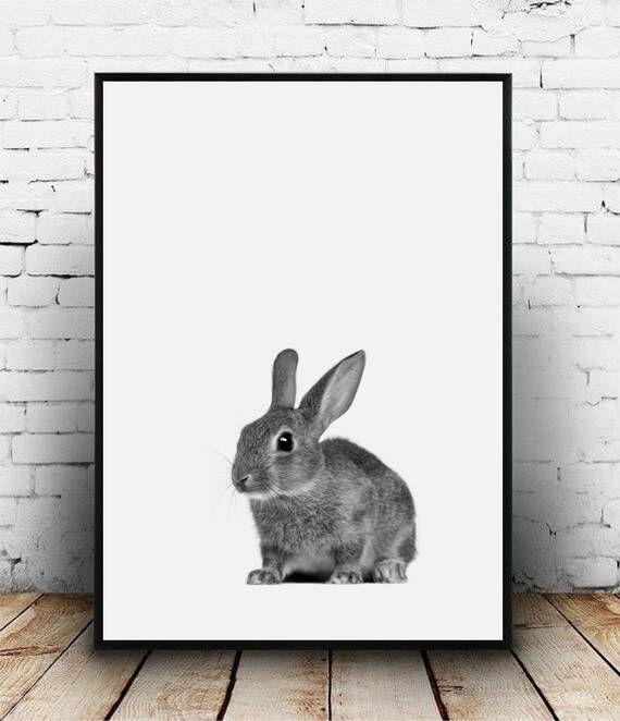 Baby rabbit print Rabbit portrait Woodland bunny print Nursery printable Rabbit photo Nursery wall art animal Nursery decor Rabbit poster by homelyspace on Etsy https://www.etsy.com/au/listing/539180508/baby-rabbit-print-rabbit-portrait