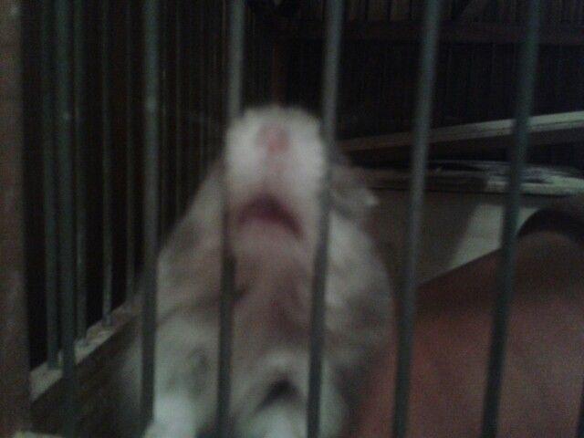 Unhappy hamster
