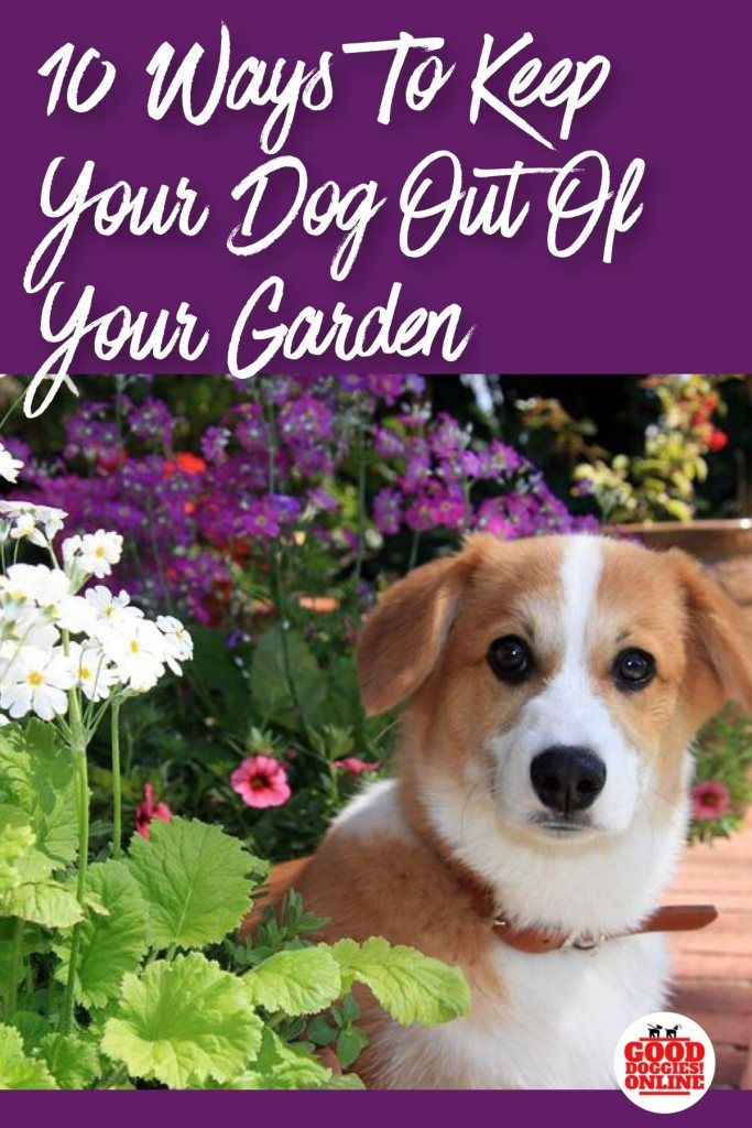 How To Keep Dogs Out Of Garden Flower Beds Good Doggies Online Good Doggies Online Flower Beds Garden Flower Beds