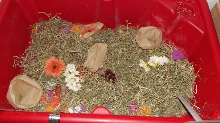 Spring School Years sensory play@ Acorns Nursery Bucharest