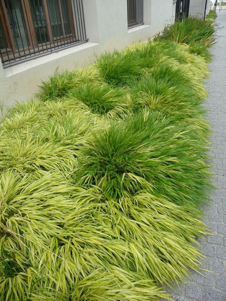 1000 id es sur le th me plante vivace sur pinterest for Plante grasse exterieur vivace