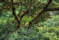 Los bosques andinos son ricos en plantas epífitas.