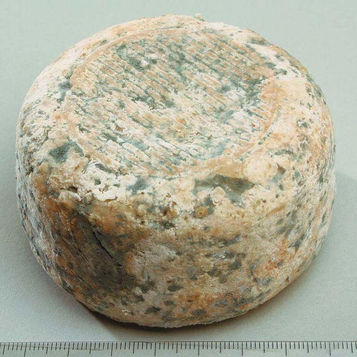 Bleu de chèvre de Haute Provence