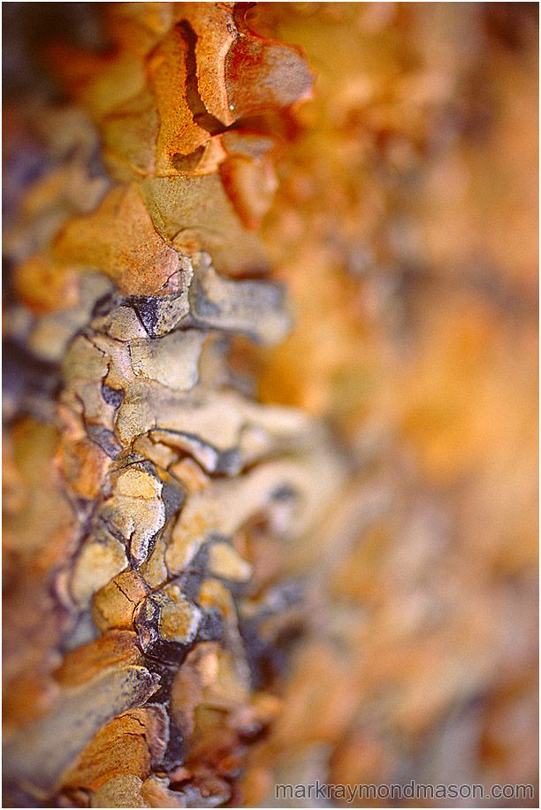 MARK RAYMOND MASON  Abstract fine art photograph showing waves of blurry, multi-coloured pine bark