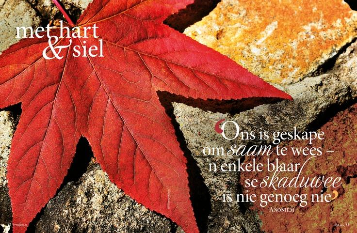Herfs/ fall, Blare/Leaves, Bome/Trees www.leef.co.za