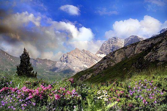 Des Alpes aux Pyrénées, en passant par les Vosges, le Jura et le Massif Central, découvrez la beauté des montagnes françaises.