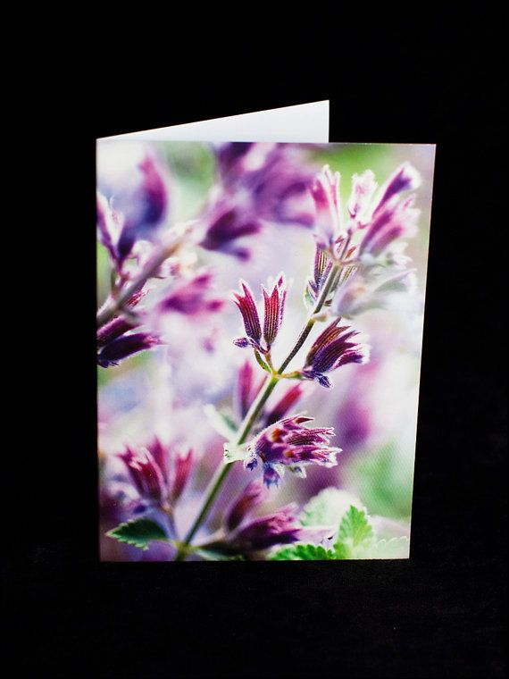 Greeting Card  Purple flower photograph  blank by ErinnaImagery, $4.50