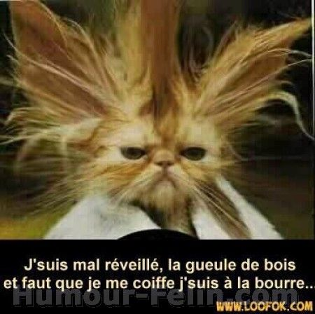 Photo drole de chat - et jsuis à la bourre...
