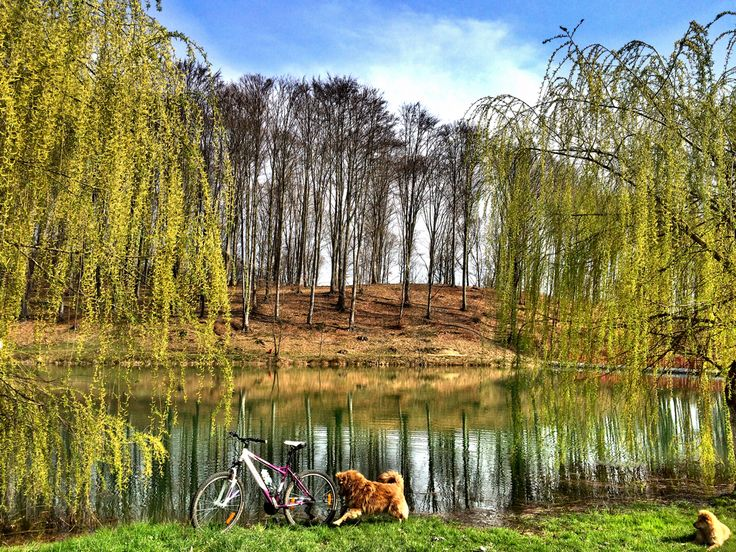 between taking my son from school and his basketball workout had time for a quick ride ... couldn't get rid of these cute dogs #sports #mtb #mountainbiking #cycling #roadcycling #girlsonbikes #lake #nature #spring
