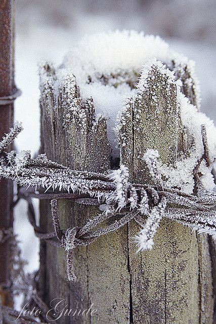 Fence post in snow