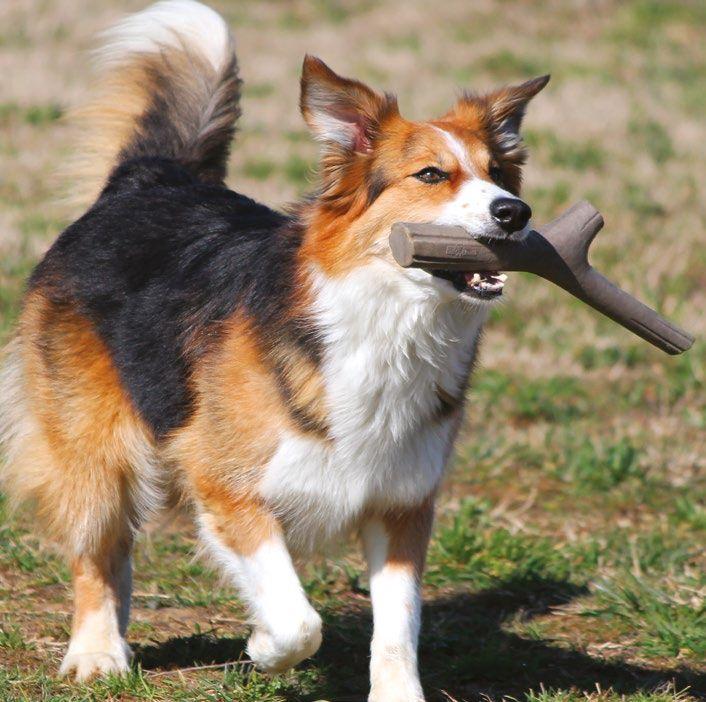 BAMA TUTTO MIO GIOCATTOLO PER CANI DI MEDIA E GRANDE TAGLIA https://www.chiaradecaria.it/it/accessori-per-cani/23133-bama-tutto-mio-giocattolo-per-cani-di-media-e-grande-taglia-8007633191503.html