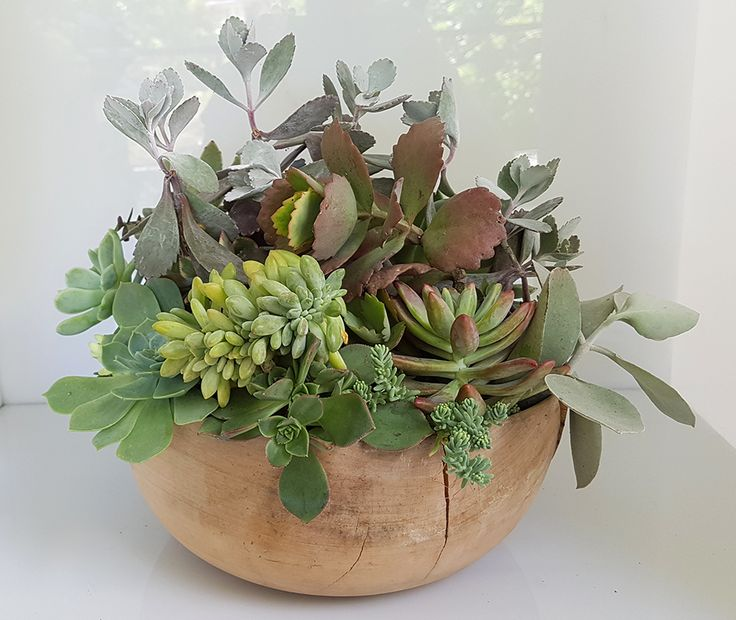 Unwanted cracked wooden salad bowl filled once again with greens.