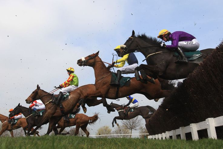 Cheltenham racende en springende paarden