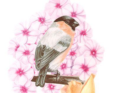 "Check out new work on my @Behance portfolio: ""Bullfinch"" http://be.net/gallery/45366283/Bullfinch"