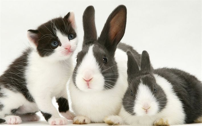 Download wallpapers rabbits and kitten, friendship, cat, rabbit, pets