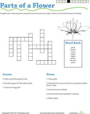 Third Grade Life Science Puzzles & Sudoku Worksheets: Life Science Crossword: Parts of a Flower