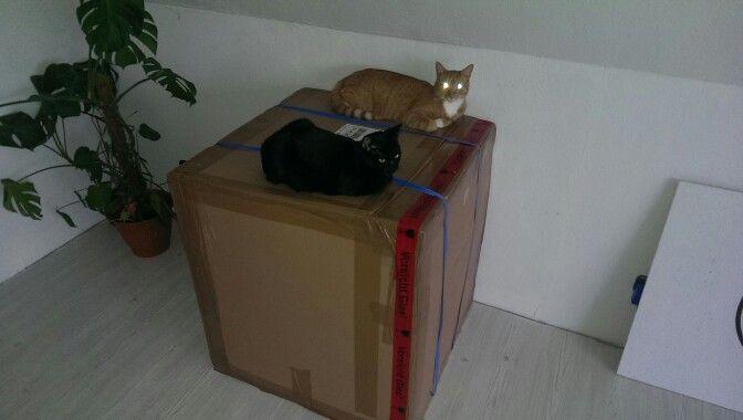 Auspacken ist gerade ganz schlecht.....