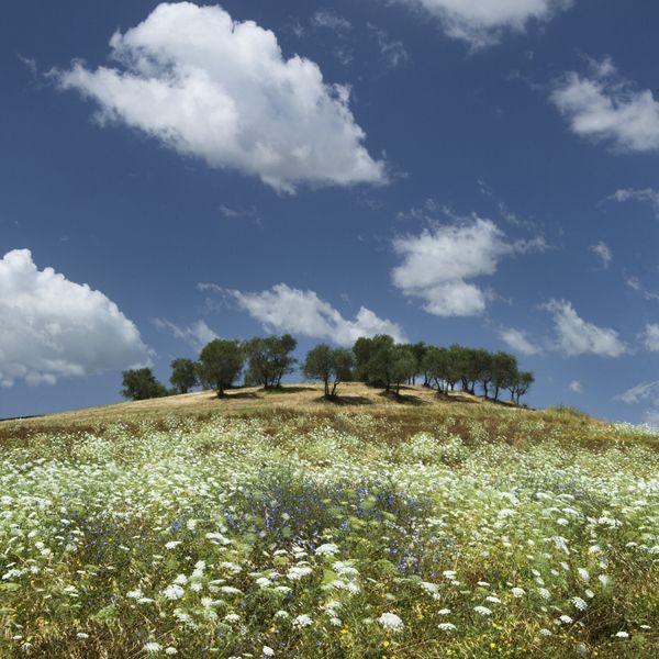 Caliano, Tuscany, Italy by Charlie Waite