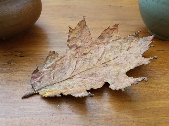 Medium Oak Leaf       £22.00