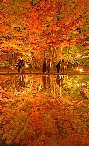 紅葉した木々の葉が池の水面に映る「逆さもみじ」で知られる岐阜県土岐市曽木町の曽木公園で7日、ライトアップの試験点灯が行われ、住民らが美しいモミジをうっとりと眺めた。ライトアップは10~19日。 ...