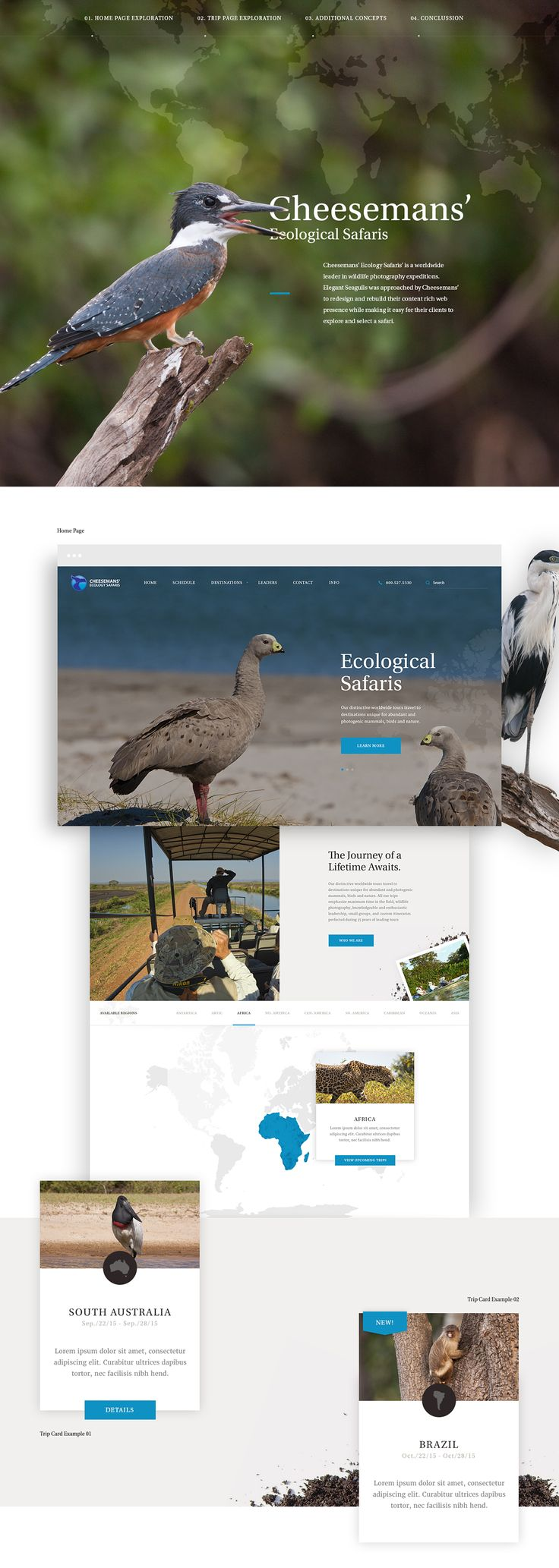 Cheesemans' Ecology Safaris on Web Design Served