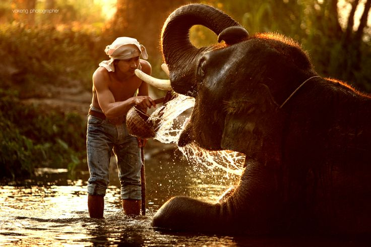 Thai Elephan by vokeng Prateep Duangkaew on 500px