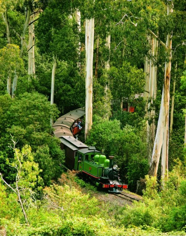 Puffing Billy through The Dandenong Ranges National Park, Melbourne, Australia.