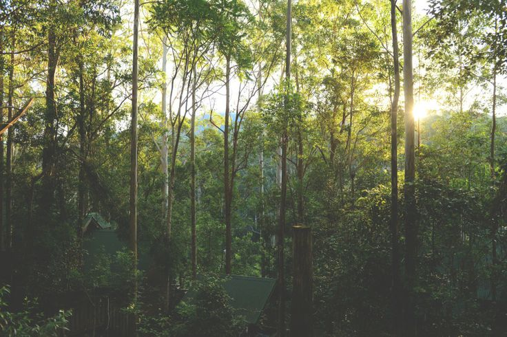 Tranquility is found in the great outdoors - Barrington Tops, Australia