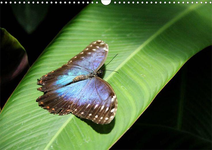 """Tier-Posterbuch """"Schmetterlinge der Tropen"""", Seite 4"""