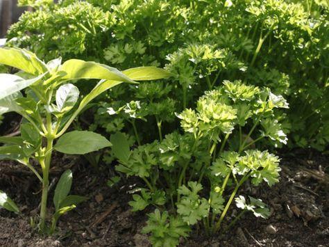 5306 best le jardin se partage images on pinterest garden gardening and plants. Black Bedroom Furniture Sets. Home Design Ideas