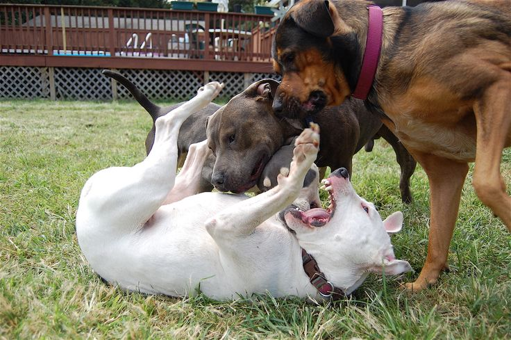 dangerous dogs should be banned Should large or aggressive dog breeds be banned or restricted 62 results 1 2 bobdaman18 i fully believe dangerous/aggressive dogs should be banned no type of dog should be banned jim_dandy follow forum posts: 885 wiki points: 10.