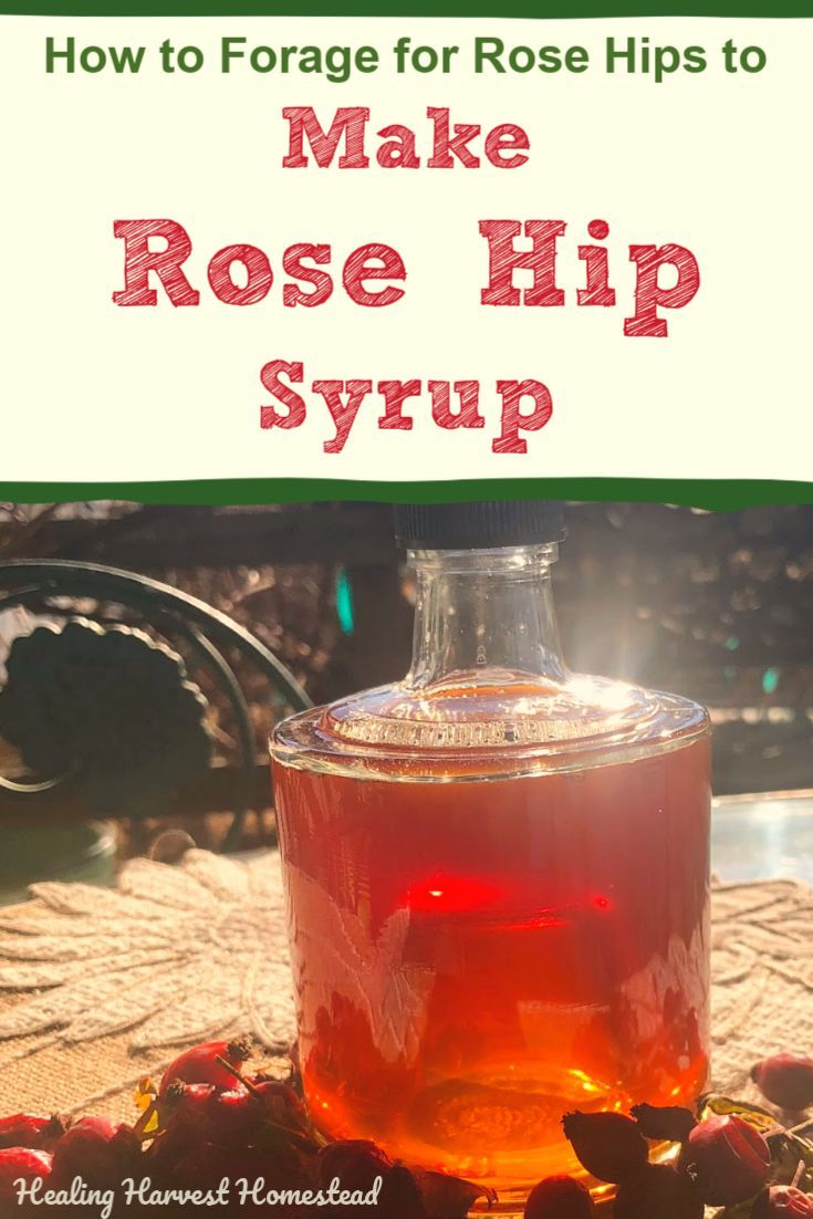 How To Forage Rose Hips And A Recipe For Rose Hip Syrup Plus What To Use It For All Posts Healing Harvest Homestead Rosehip Recipes Herbalism Rosehip