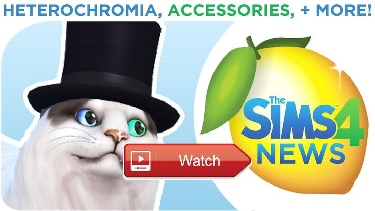 THE SIMS CATS DOGS HETEROCHROMIA ACCESSORIES AND MORE  News Sources Sims Community Sims VIP TheSimscom Twitch Facebook  on Pet Lovers